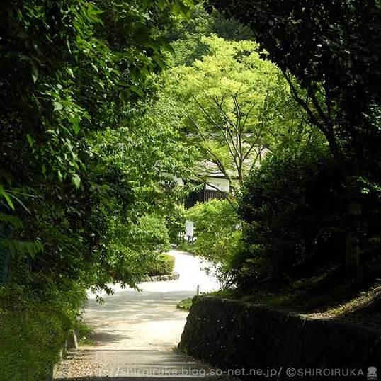 新林公園01.jpg
