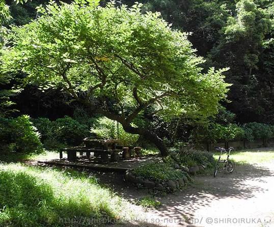 新林公園の木陰.jpg